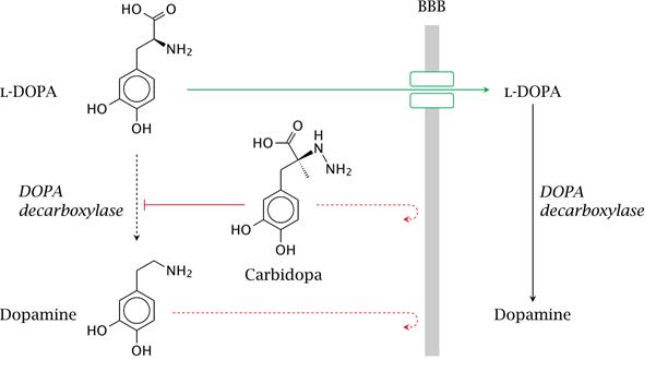 l-dopa-crossing-bbb