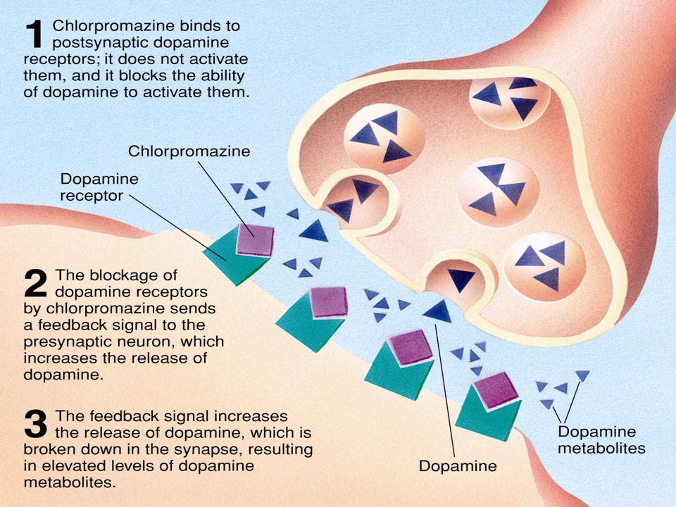 dopamine-receptors-blocked